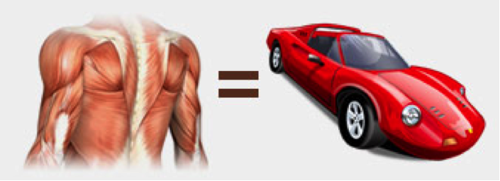 Image: Your body is the car